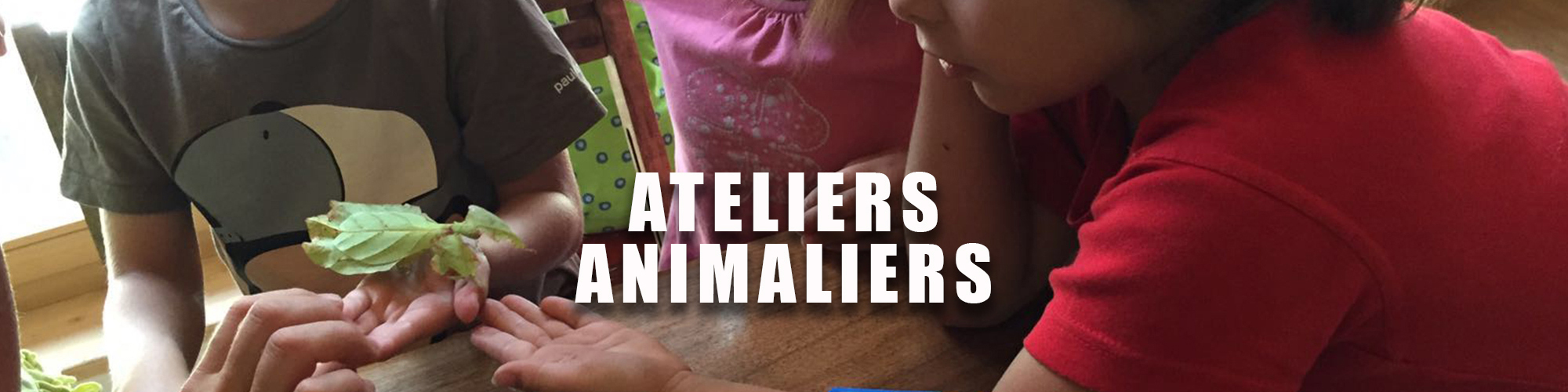 D animation animale ateliers